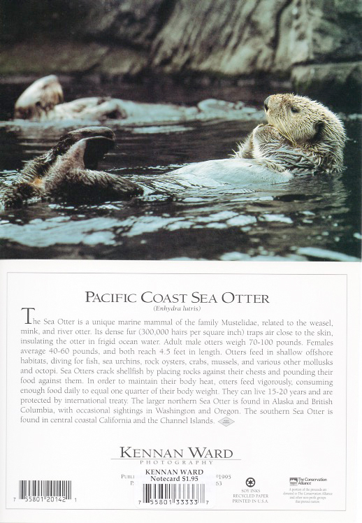 142 Sea Otter Recline
