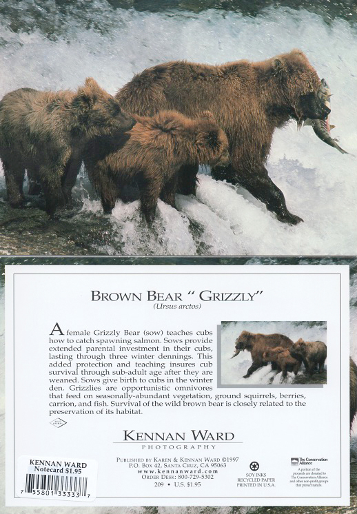 209 Grizzly Bear Momcubs Fish