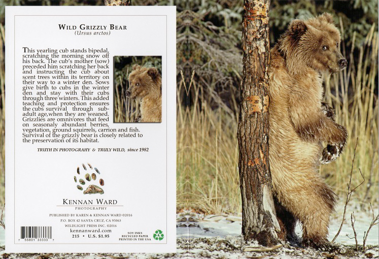 215 Wild Grizzly Beartree
