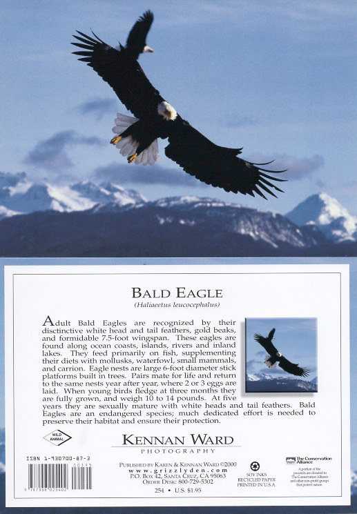 254 Bald Eagles In Flight